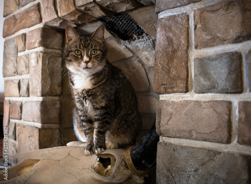 cat in fireplace