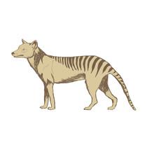 Tasmanian Tiger Illustration D...