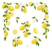 Yellow Citrus Fruit. Lemon, Leaves And Flowers. Tropical Clip Art Illustration