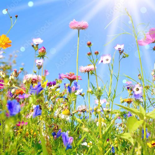 bunte Blumenwiese - Grußkar...