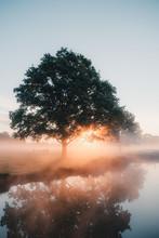 Golden Nature Sunrise