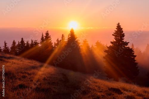 Photo sur Toile Rouge mauve Spectacular sunrise over the foggy forest