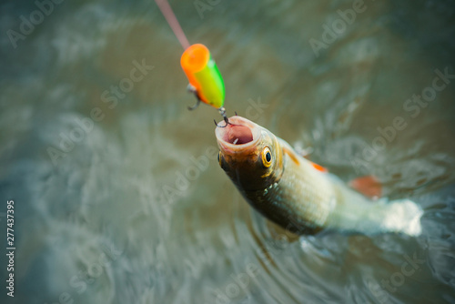 Fishing with spinning reel. Bass fishing. Concepts of successful fishing.