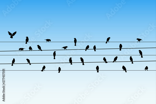 Pinturas sobre lienzo  Birds on wires