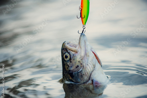 Photo sport fishing