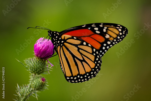 Poster Pays d Europe Symmetrical Butterfly