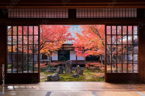 Fototapeta 京都 建仁寺の紅葉 obraz