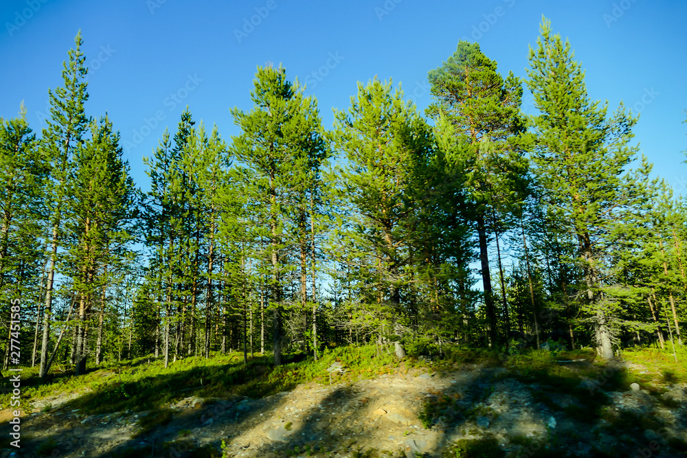 Fototapety, obrazy: road in the forest, in Sweden Scandinavia North Europe