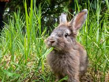 Cute Little Rabbit Sitting On ...