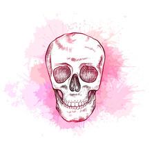 Drawing Of Human Skull With Ha...