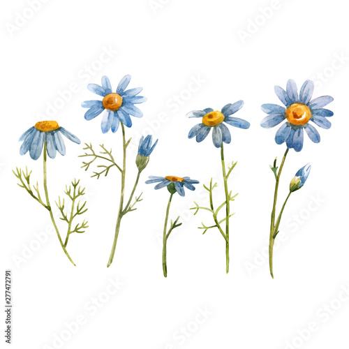 Blue chamomile daisy vector flower Fototapete