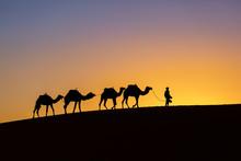Silhouette Of A Camel Caravan At Sunrise In Desert Sahara, Morocco