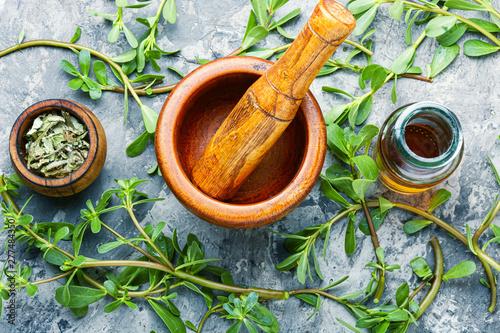 Fototapeta Purslane medicinal plant obraz