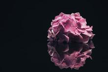Beautiful Purple  Hydrangea Flower On A Glass Black Background.