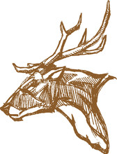 Buck Deer Head Line Art