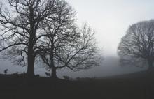 Dense Winter Fog, Mist Covered...