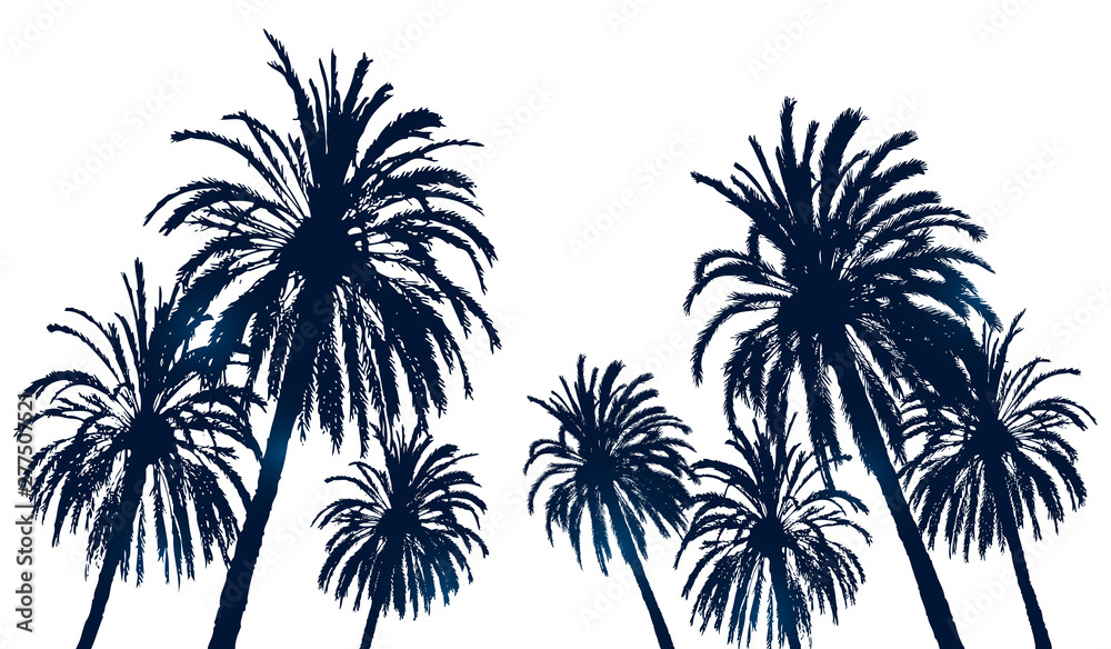 Fototapety, obrazy: Summer background with palm trees silhouettes on white