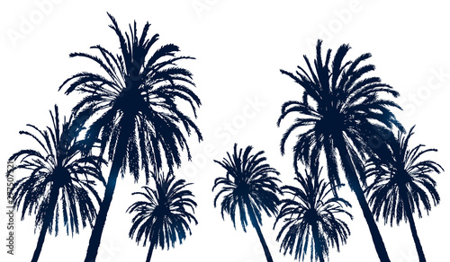Photo  Summer background with palm trees silhouettes on white