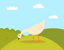 Goose Pecking Grass, Walking F...