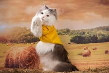 Fluffy Cat Walks In The Field ...