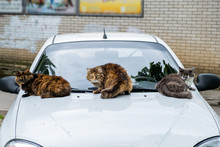 Three Homeless Cats Sitting On...