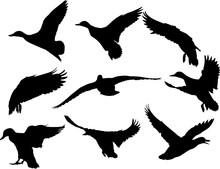 Nine Flying Ducks Black Silhouettes On White
