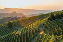 Langhe Region, Vineyards At Sunset. Serralunga D'Alba, Piedmont, Italy