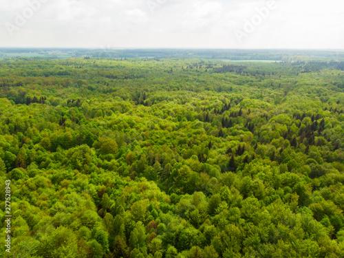 Autocollant pour porte Foret Las liściasty stary gęsty korony drzew drzewo olchy dęby w lesie wiosna zielono