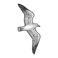 Seagull Bird Animal Sketch Eng...