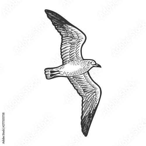 Seagull bird animal sketch engraving vector illustration Fototapeta