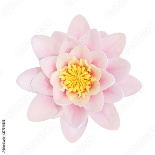 Poster de jardin Nénuphars Lotus Blossom. A pink Lotus flower in full bloom, isolated on white.
