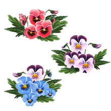 Set Of Bouquet Of Pansies Isol...