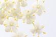 canvas print picture - Holunderblüten Nahaufnahme