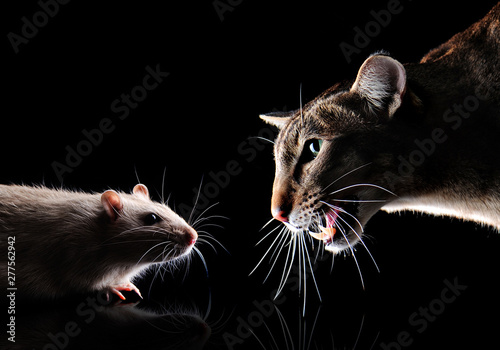 Closeup picture of a cat hunting the rat in the night Canvas Print