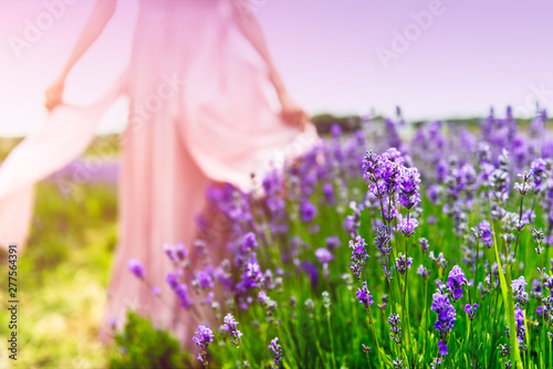 Foto auf Leinwand Rosa hell Field of organic lavender flowers , summer concept, farm which produces lavender oil