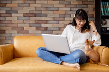 Young Happy Asian Woman Using Laptop On Her Lap And Chihuahua Puppy Pet Sitting Together On Sofa At Cozy Home