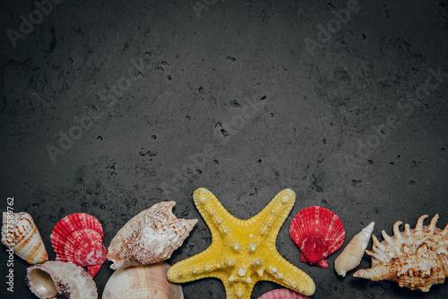 Fotografie, Obraz  Seashells from the sea on a stone dark background