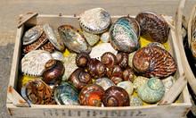 Box Of Colourful Seashells