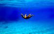 canvas print picture - Mediterranean rock seastar - Coscinasterias tenuispina