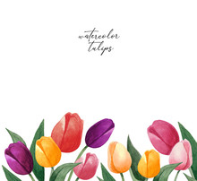 Watercolor Tulips Border. Can Be Used As A Card. Colorful Tulips On White Background. Botanical Art.