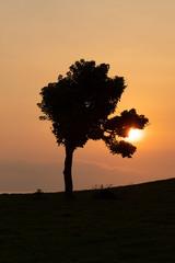Puesta de sol en árbol