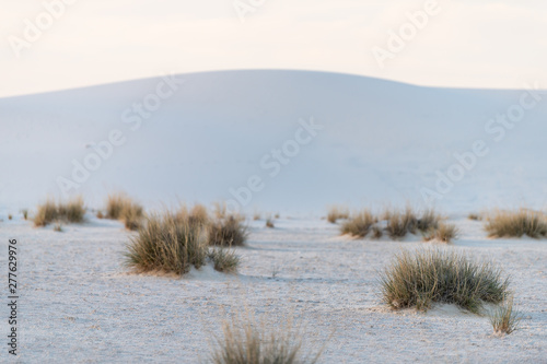 Photo Plants shrubs on White sands dunes national monument in New Mexico with sunset s