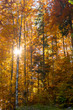 Autumn Colors - Lush Foliage - Forest.