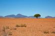 Baum Wüste