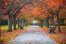 Tree Lined Autumn Scene In Gre...