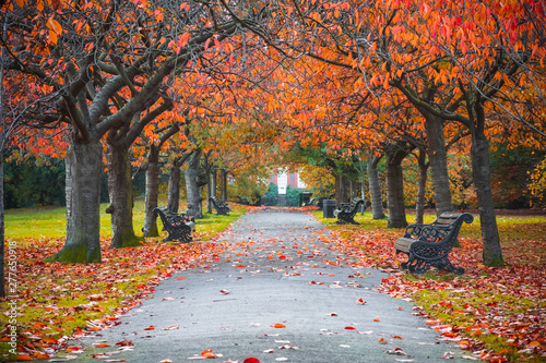 Obraz Tree lined autumn scene in Greenwich park, London - fototapety do salonu