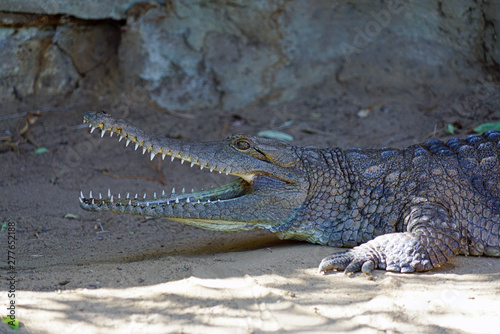Printed kitchen splashbacks Crocodile A crocodile in a zoo in Australia