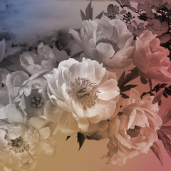 Panel Szklany Peonie Vintage floral card. Peonies flowers close-up.