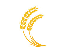 Agriculture Wheat Logo Template Vector Icon