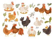 Collection Of Rooster, Hen And...